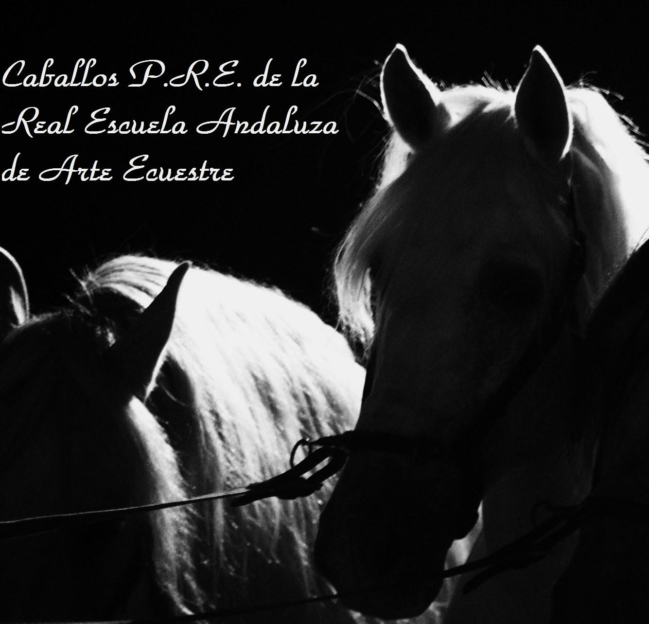 caballo-andaluz-3