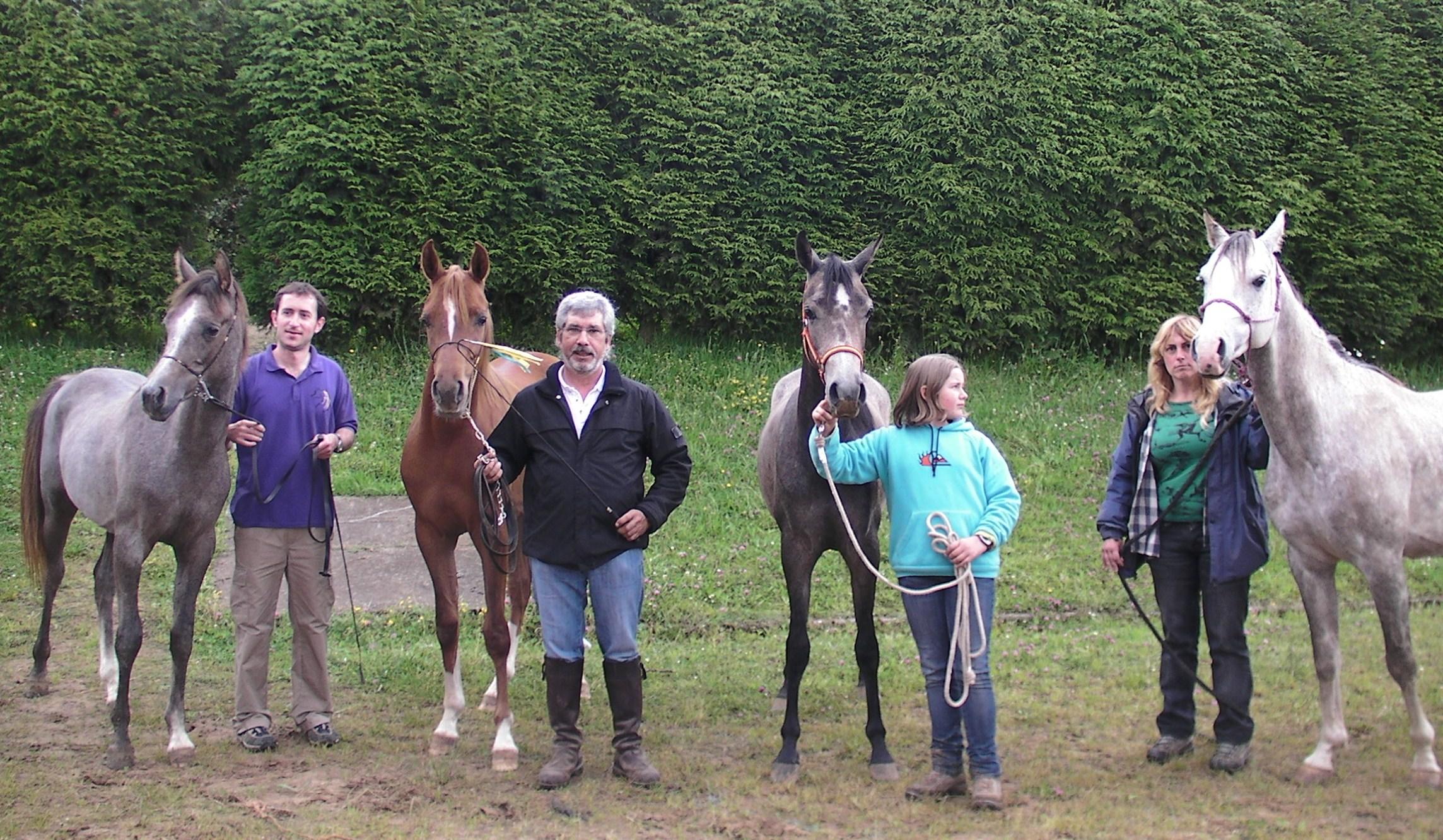 foto de los caballos